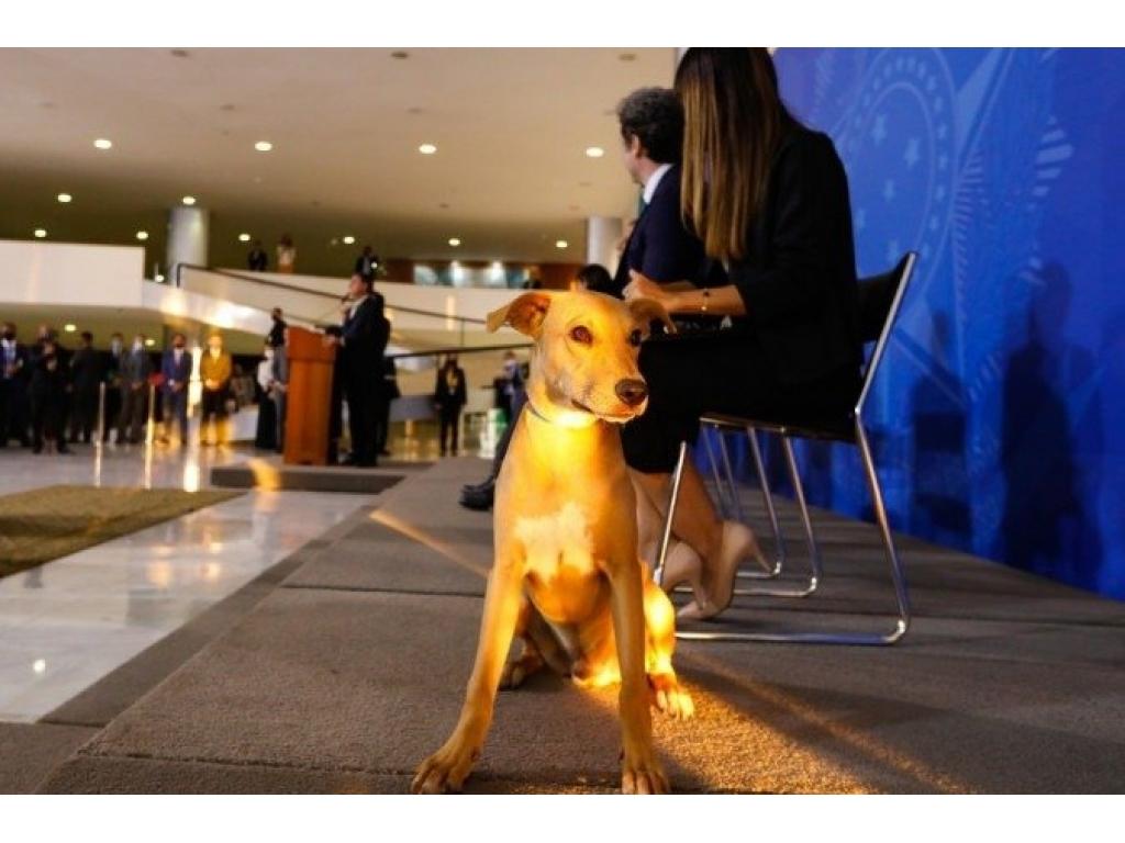 ATENCÃO: Bolsonaro sanciona lei que aumenta pena para maus tratos a cães e gatos